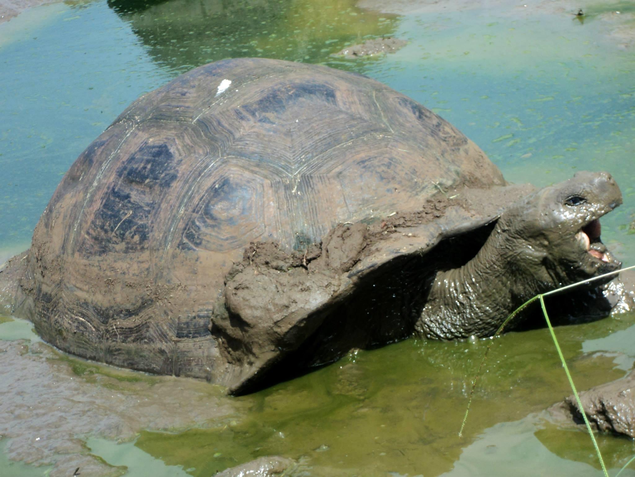 Conocer las tortugas gigantes es espectacular