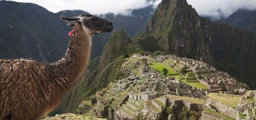 Llama en ruinas de Machu Picchu