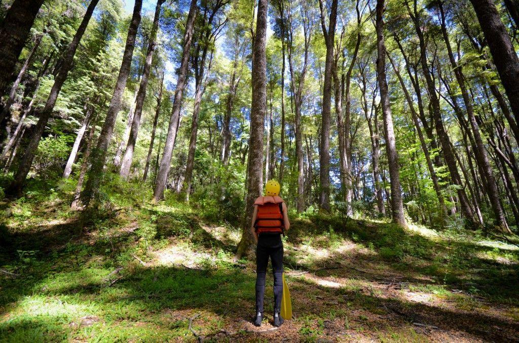 Bosques en Bariloche, Argentina