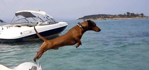 Perro de vacaciones