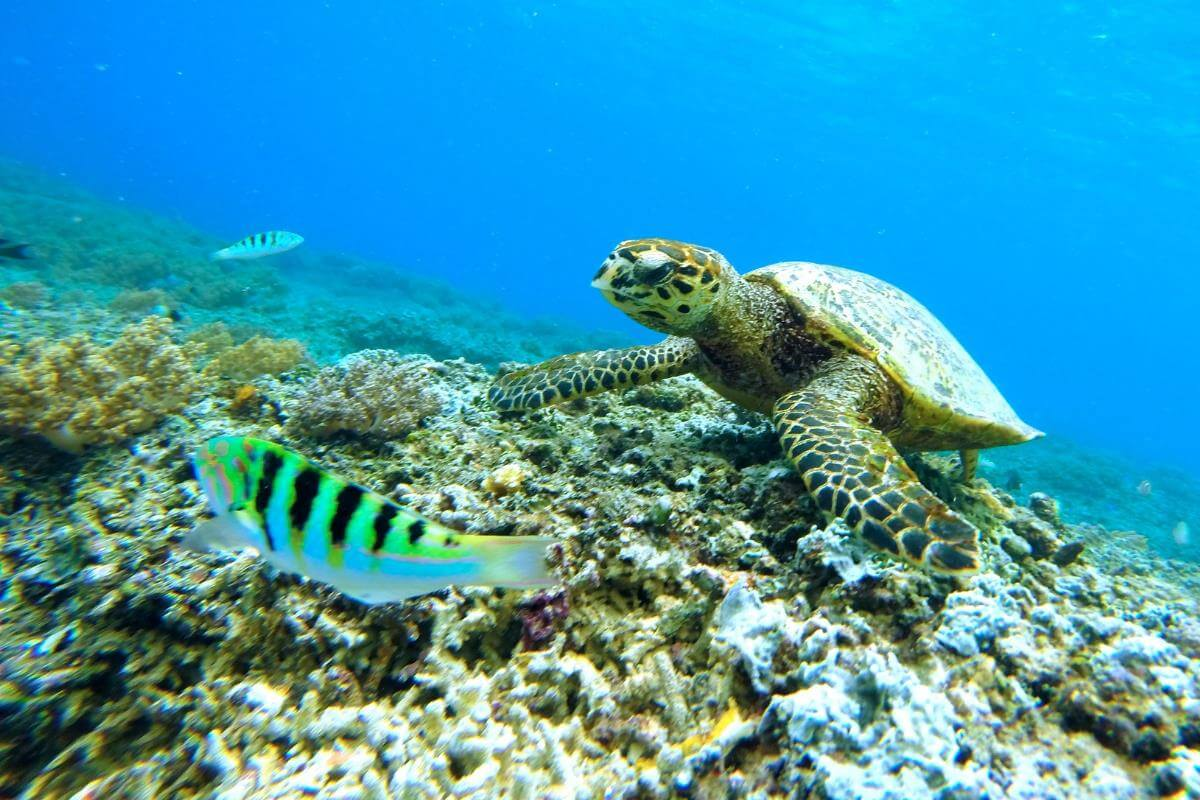 Snorkell en la isla de Maui, Hawaii, es de los mejores del mundo