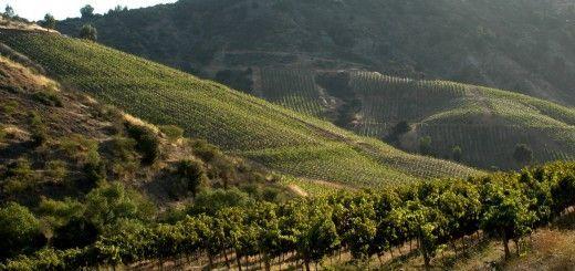 valle-de-Cachapoal-ruta-del-vino-chileno