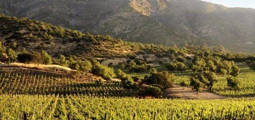 Valle del Maipo, Ruta del vino chileno