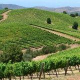 valle-del-maule-chile-vinos