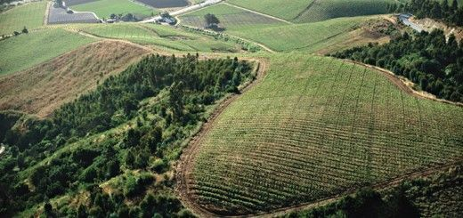 valle-san-antonio-vinos-chile