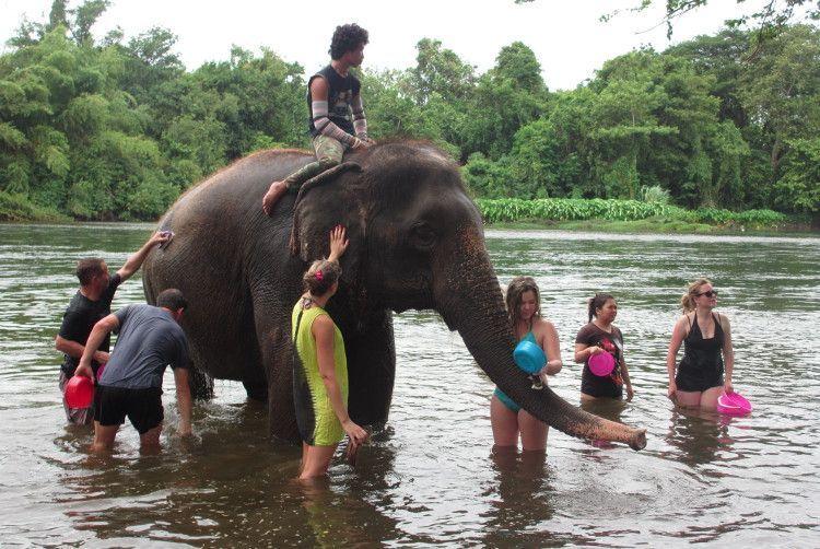 Un animal encima y seis abajo, bañando a un pobre elefante