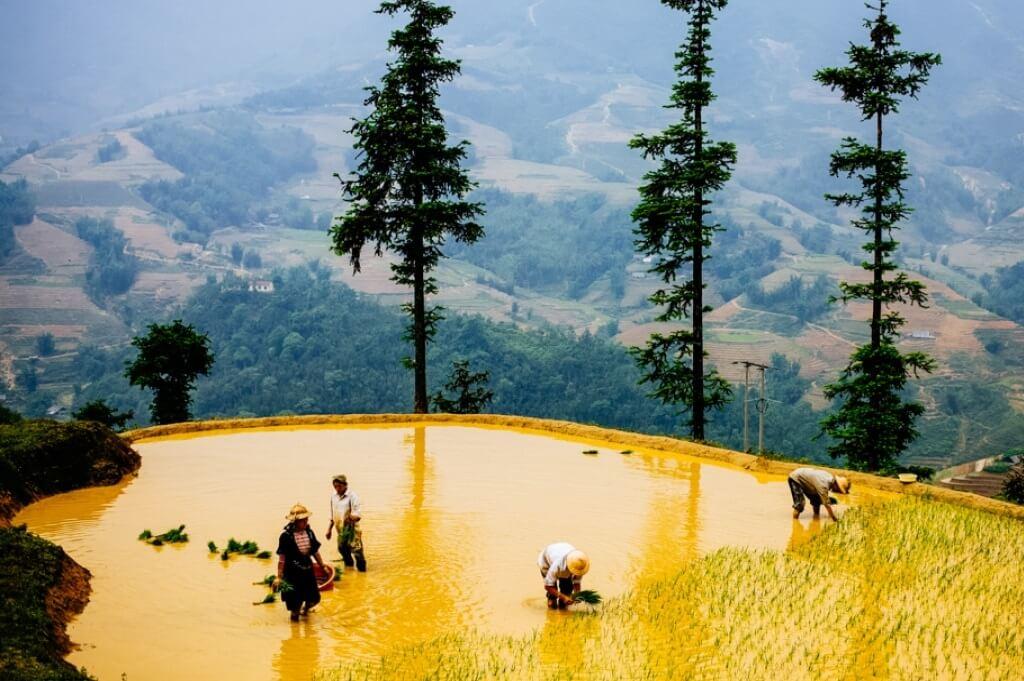 Terrazas de arroz características de Vietnam. En la foto, Sapa