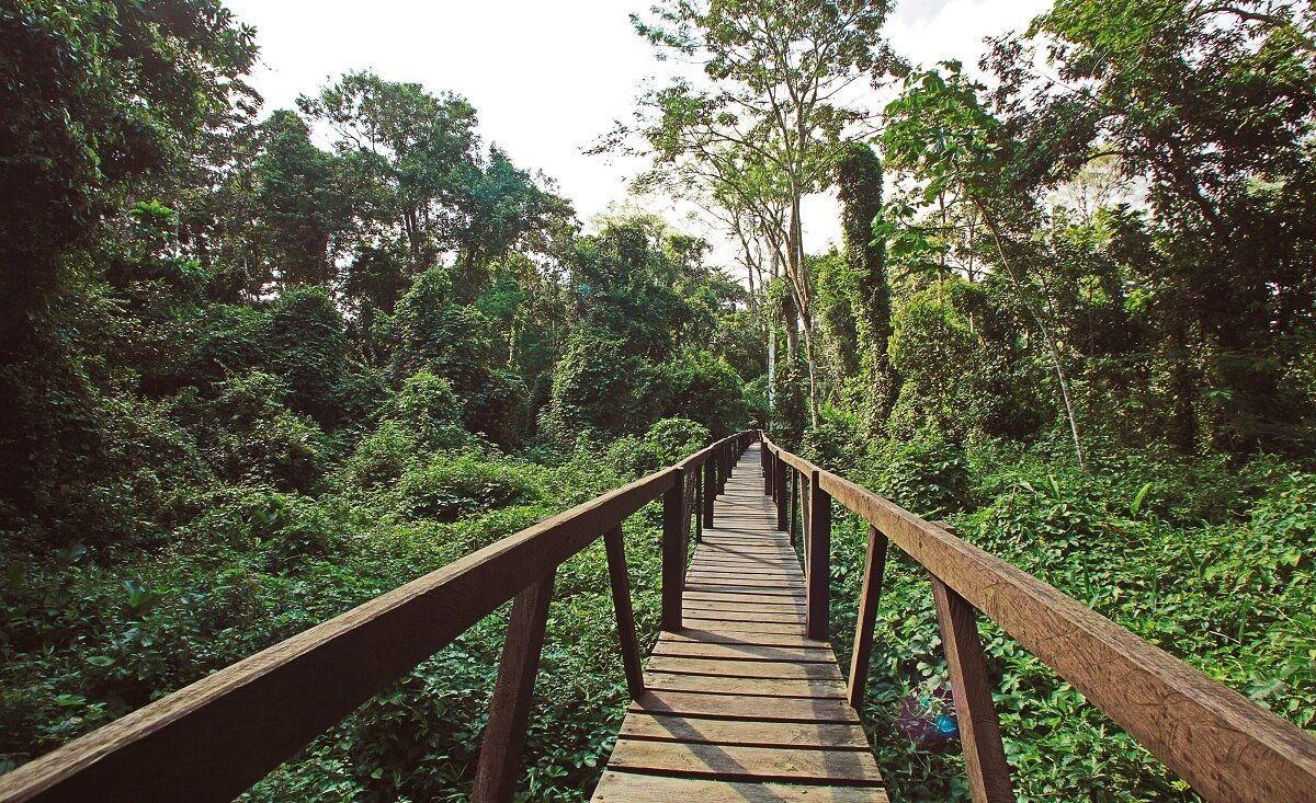 Si eres amante de la naturaleza extrema, viajar al Amazonas es ideal para ti